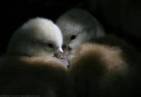 Siblings by sekhmet-neseret