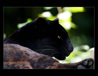 Black Princess. by sekhmet-neseret