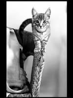 Mister Kitten. by sekhmet-neseret
