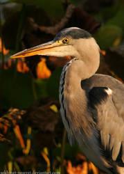 Wild Heron by sekhmet-neseret