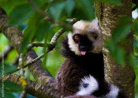 Impolite Lemur by sekhmet-neseret