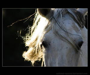 Cheval... by sekhmet-neseret