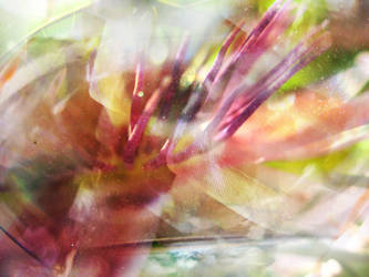 wonder/dancer by synesthesea