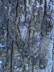 violet bark by synesthesea