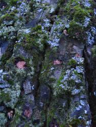 lichen moss 06 by synesthesea