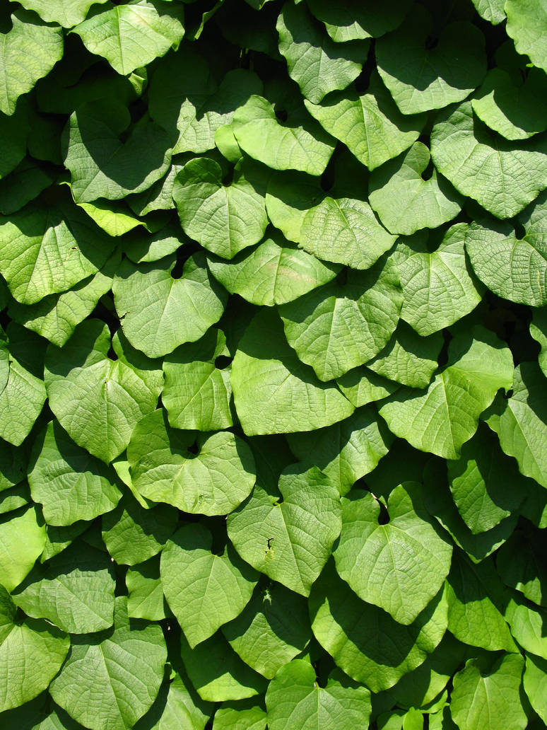 green leaves wall by synesthesea
