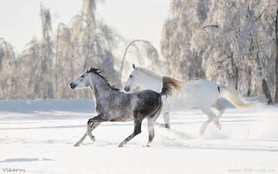 Russian winter 2011 by Vikarus
