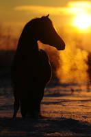 sunset dragon by Vikarus