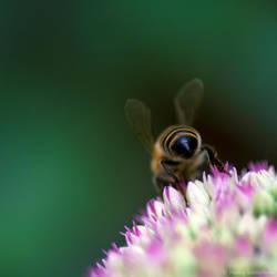 Bee-ka-boo. by Anoya