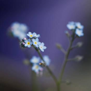Blue. by Anoya
