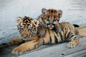 Tiger Cub and Geronimo 2 by filemanager