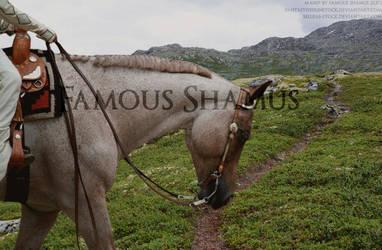 Western Horse 3 by FamousShamus109