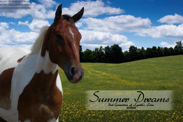 Summer Dreams by FamousShamus109