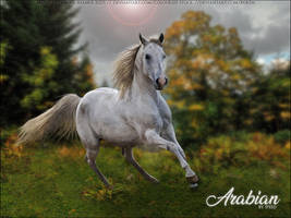 Arabian by Speed by FamousShamus109