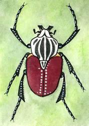 ACEO Goliathus goliatus by yeyra