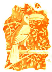 Tucan in orange by yeyra