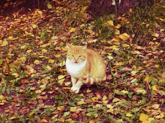 autumnal red cat by AlinaLuna