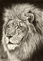 ATC Lion I by HOULY1970