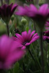 Purple Flower by ChristelMarie