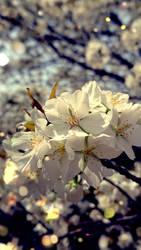 flower by kaqikaqikaqiqi