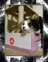 New Shoe Box + Cat by ariaeko