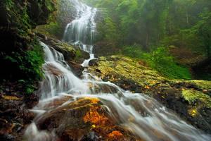 Majestic Tristania by DrewHopper