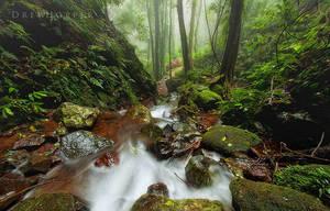 Downstream by DrewHopper