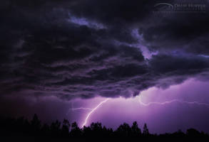 Electric Purple by DrewHopper