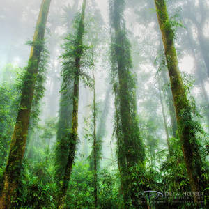 Forest Symmetry by DrewHopper