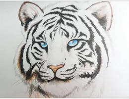 white tiger by Jai-artes