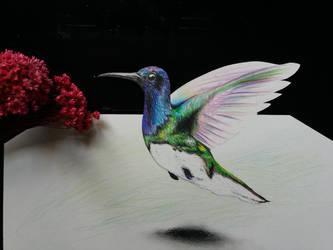 HUMMINGBIRD 3D by Jai-artes