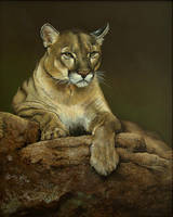 Cougar by jmstudios