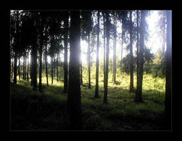:: forest :: by synergia