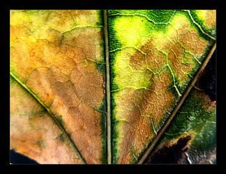 :: fall leaf III :: by synergia
