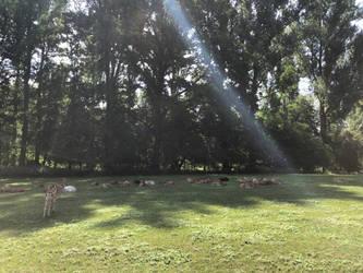 Deer Haven by lollycavalier