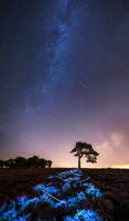 The night time pilgrimage by JamesRushforth