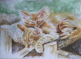 Sleeping cats by danuta50