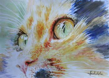The eyes of my Lusia by danuta50