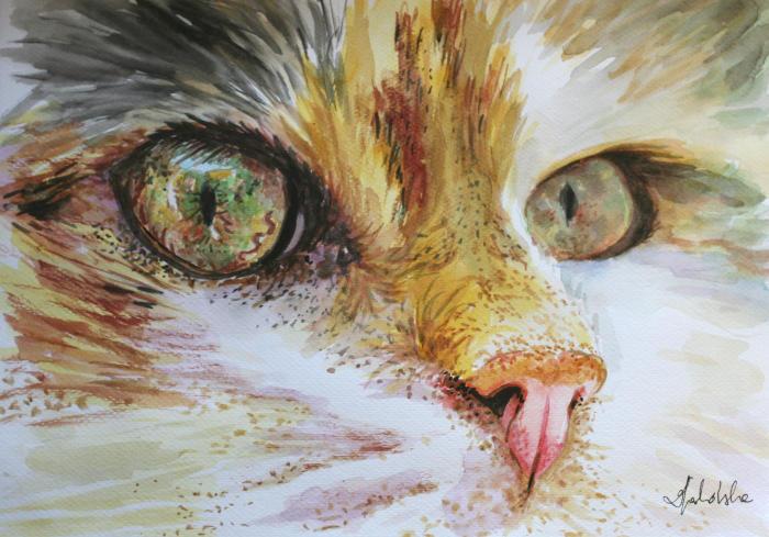 Cat's eyes by danuta50