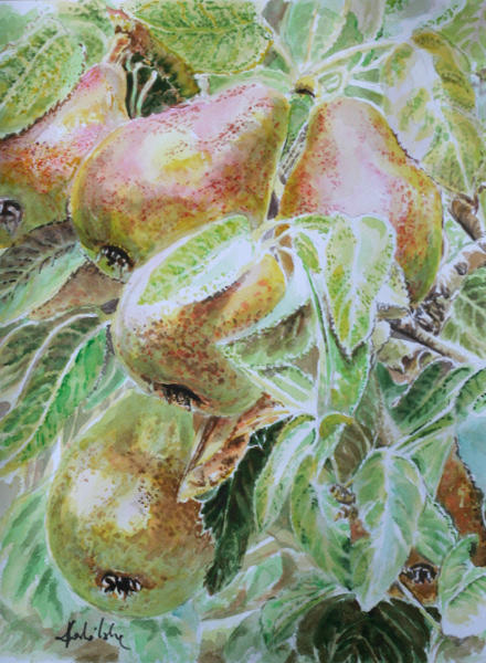 Pears by danuta50