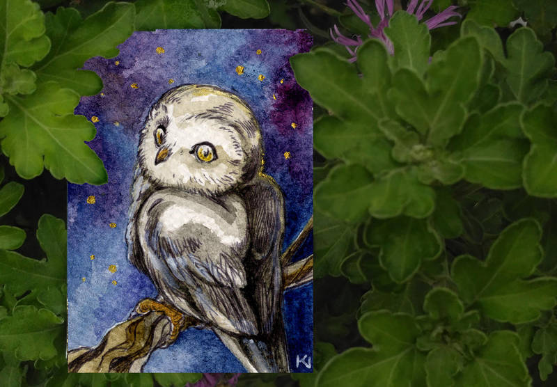 owl aceo by Kaos-Nest