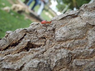 Insecto by hami-zuko