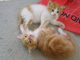 kittens. by wonderousbeings