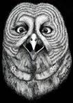 Grey Owl by deanreevesii