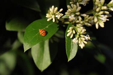 Dear Ms. Ladybug by ColdDevil