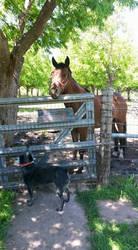 My aunts horse by Ninjaturtlegirl1