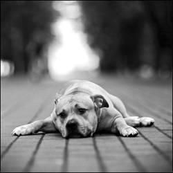 Poor Puppy by missALEXcrunk