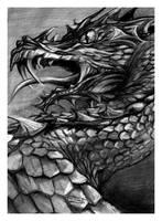 dragon by paula2206