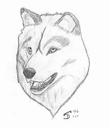 Wolf by gabefinder