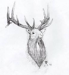 Elk by gabefinder